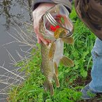 Pike fishing in the polder (23-03-2014)